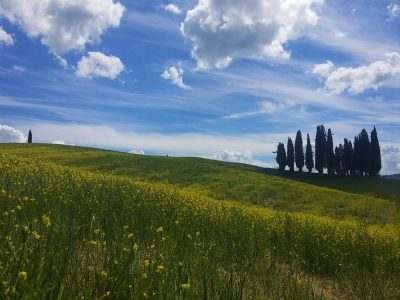 ORCIA 11